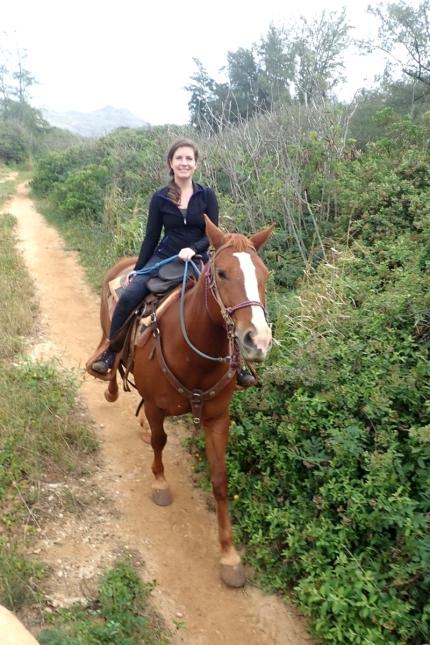 Kauai horse